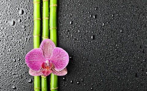 orchid_on_bamboo_hd_widescreen_wallpapers_2560x1600