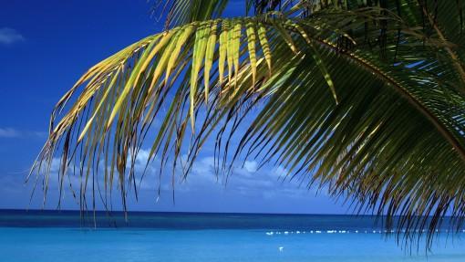 roatan-beach-1920-1080-3282