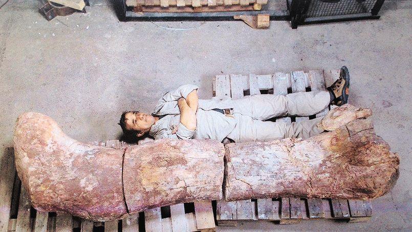 A technician lies next to the femur of a dinosaur at the Egidio Feruglio Museum in Trelew