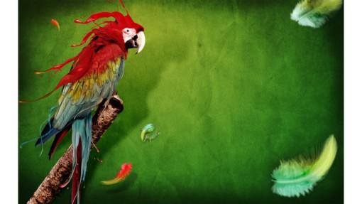 splash_of_parrot-1920x1080