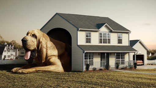 the_dog_house-1920x1080